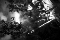 /img/fotografias_angel_villegas_plantas2.jpg