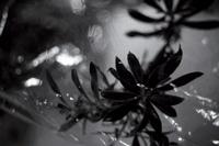 /img/fotografias_angel_villegas_plantas3.jpg